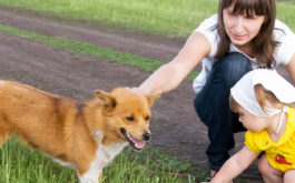 Dogs and children can make the best playmates, if you supervise them