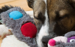 A dog can safely play with its toys, depending on how you clean them