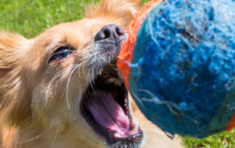 Give your dog a small toy like a velcro ball to get them excited
