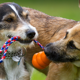 Rope toys can withstand plenty of play from medium size dogs
