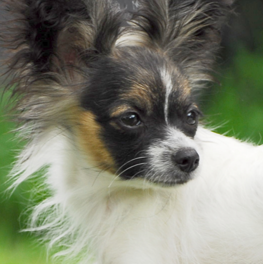 Perked ears suggest the body language of a confident dog