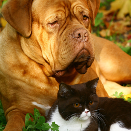 Keep your cat & dog away from piles of compost in the autumn