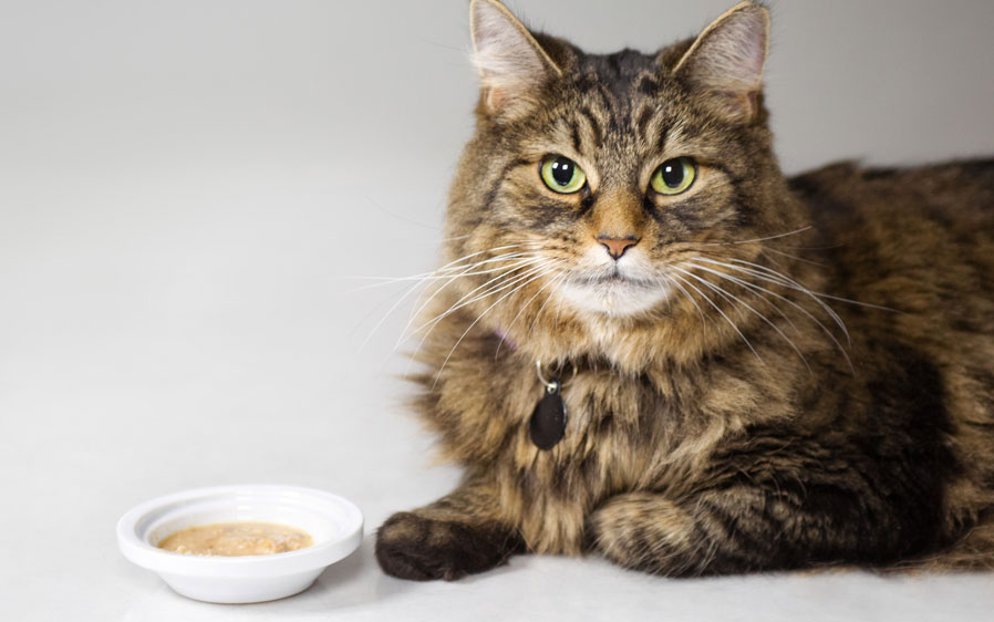 Picture of a cat next to a bowl of Hartz Delectables Lickable Treat chowder. Hartz Delectables® Lickable Treats, the first Wet Cat Treat!