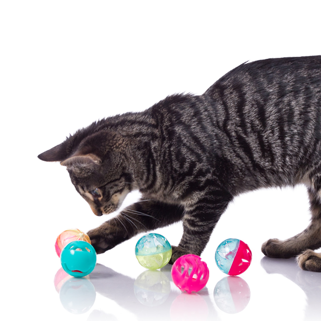 Playful Egyptian Mau poking at colorful ball toy, Hartz SKU 3270082183