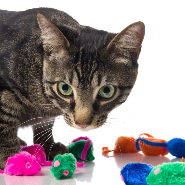 Cat hovering over a sprawl of colorful mouse toys, Hartz SKU 3270098059