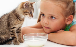 Young girl learns how to feed her kitten from a bowl