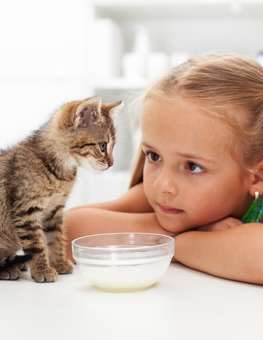 How you feed your kitten will affect how well they digest their food