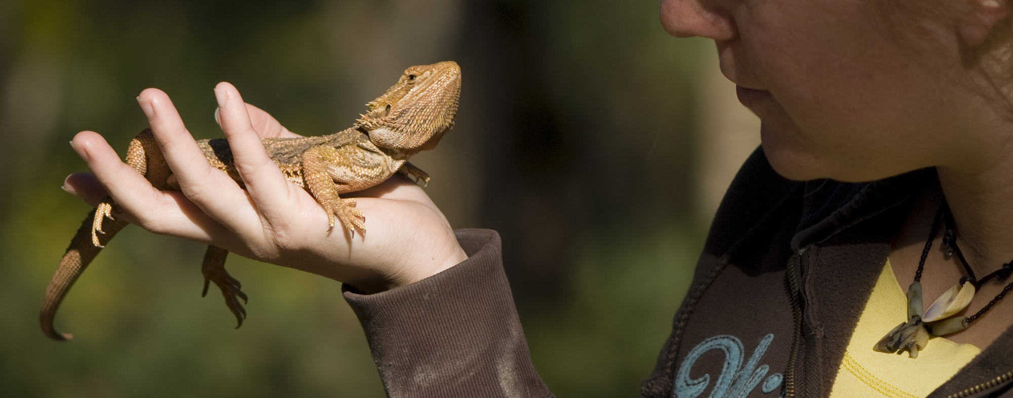 A pet reptile that fits in your hand will be easy to handle