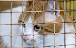 Lounging in their cage, a cat waits for you to adopt them