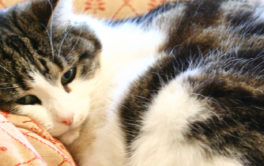A cat with arthritis may be not willing to get up after sleeping