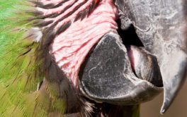 You should monitor your bird's beak for any breaks or injuries