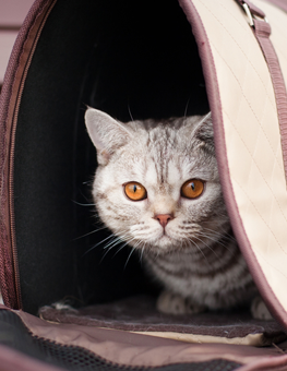 An adopted cat may be unwilling to leave their carrier at first