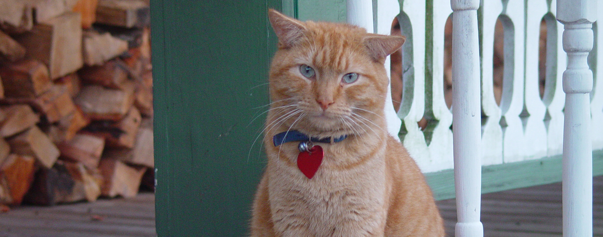 Outside on the porch, an orange cat sits with a collar around its neck