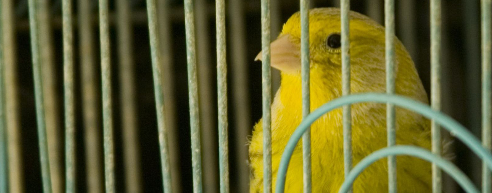 How to choose a bird cage article image - large