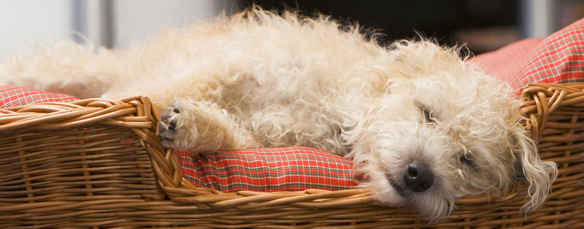 Dogs can sleep as long as 12 hours a day inside of a dog bed