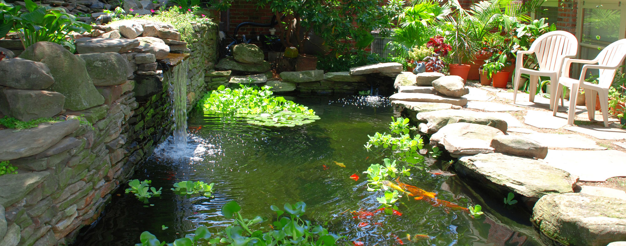 A water garden thoughtfully designed to be habitat for pet fish