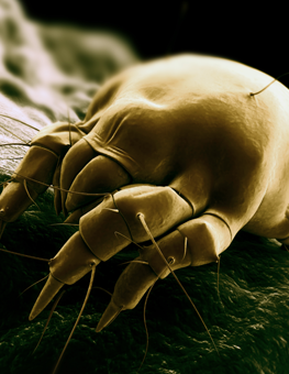 Physical contact with an animal is how a cat can get ear mites