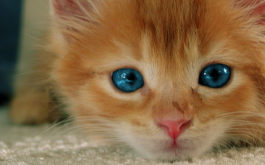 You should find a safe foster home for your small orange kitten