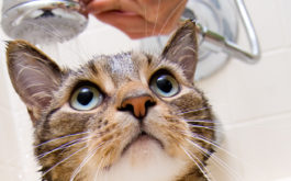 Bathing your cat regularly will help with their grooming