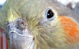 Pet parrot may start plucking its own feathers out of boredom