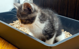 You should train your newborn kitten to use a litterbox ASAP