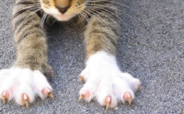 Cat stretching its claws outside, in need of a grooming or trimming