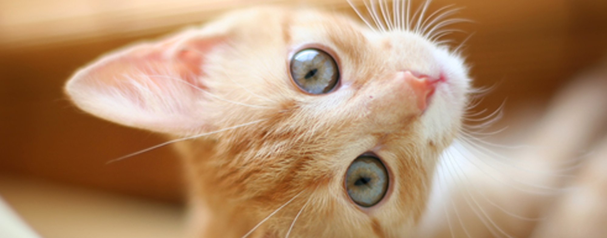 When adopting a kitten, you should consider their breed and sex