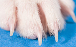 Dog's paw and nails stretched out at a visit to the vet's office