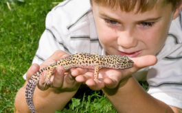 A child laying on the ground, holding a pet reptile gently in their hands