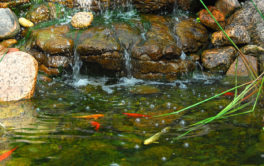 An outdoor pond for pet fish, free of excessive algae growth
