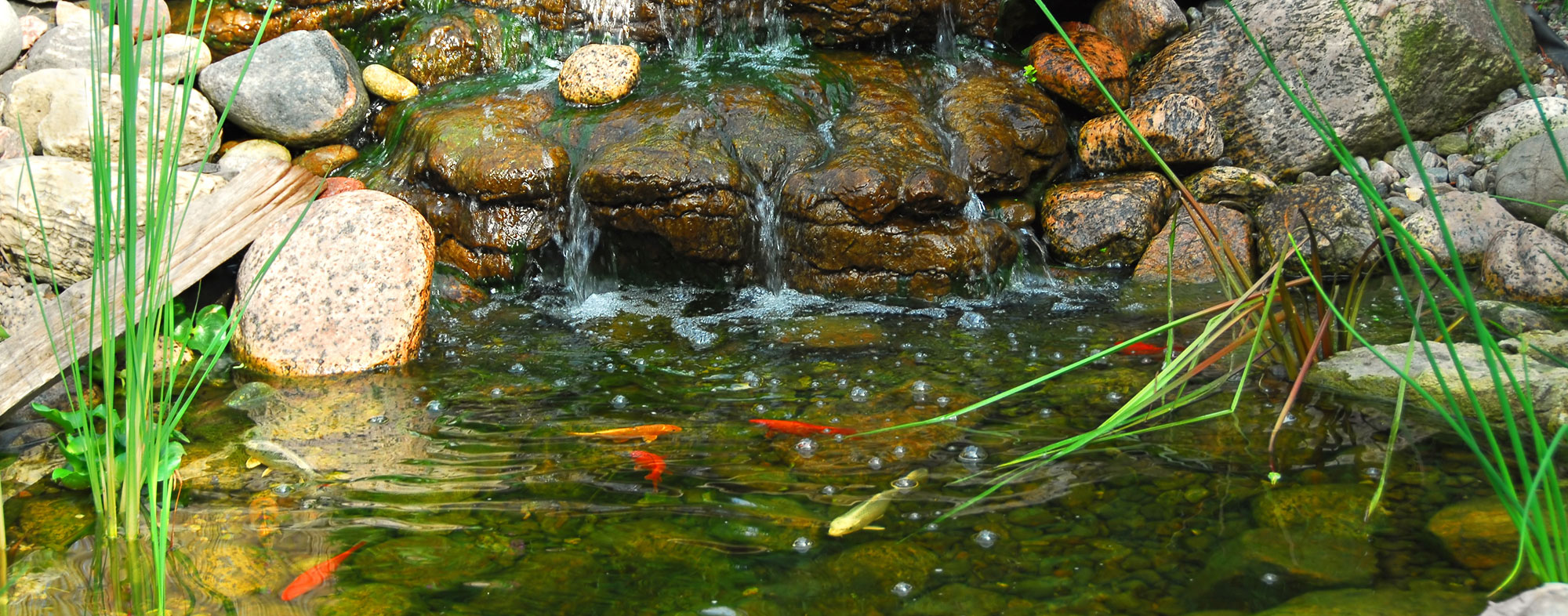 Keeping Your Pond Clean | Hartz