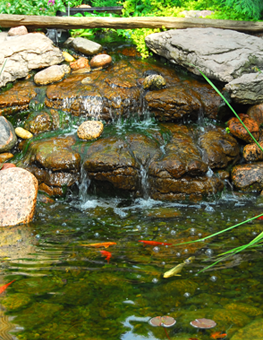Pet fish swimming in an outdoor pond full of rocks and waterfalls