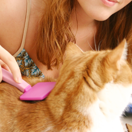 Small orange cat being brushed with purple handle by owner