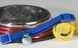 All the essential dog supplies, like a metal bowl, harness, and ball toys