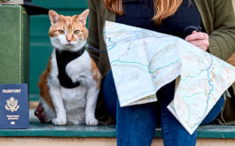 Owner consults a map, with her cat leased next to her, while traveling