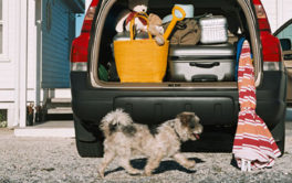 Unleashed dog happily walking past an automobile loaded for traveling