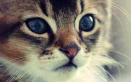 While seemingly healthy, small kitten may be carrying parasites or fleas