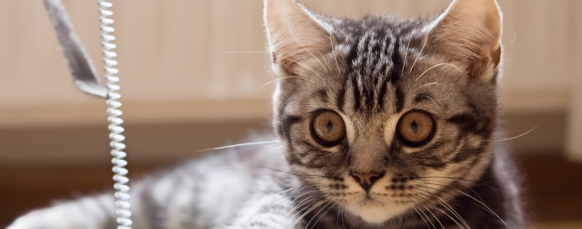 With large eyes, small kitten learns social behavior by watching siblings