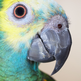 A healthy pet bird with a smooth beak