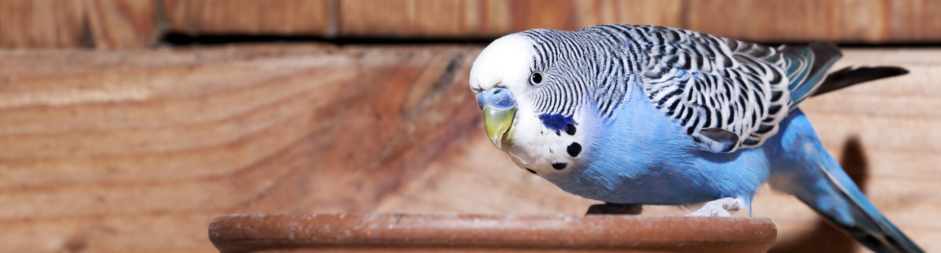 Caring for pet birds a few helpful tips hartz for Fish usa coupon code