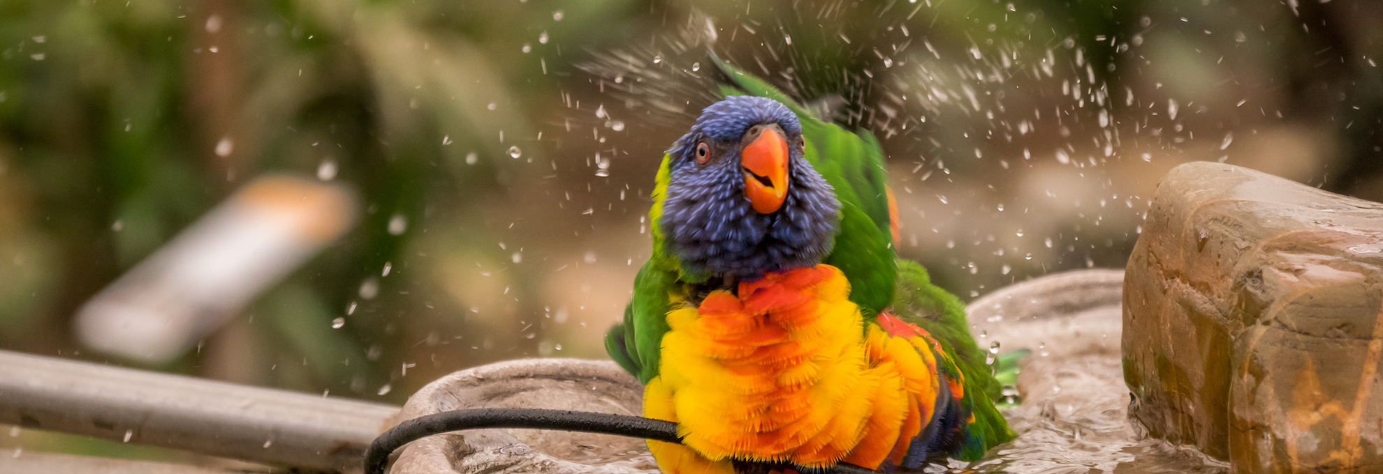 Image result for when to bathe your parrot