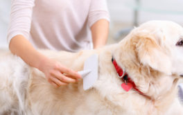 Grooming dogs with a brush prevents hair from shedding everywhere