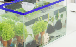 A freshwater aquarium filled with plants