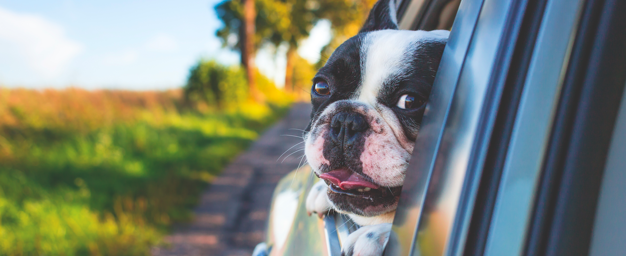 Sedatives could be the answer to your dog's car sickness
