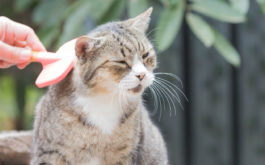 Grooming your cat with a brush will help detangle mats of hair