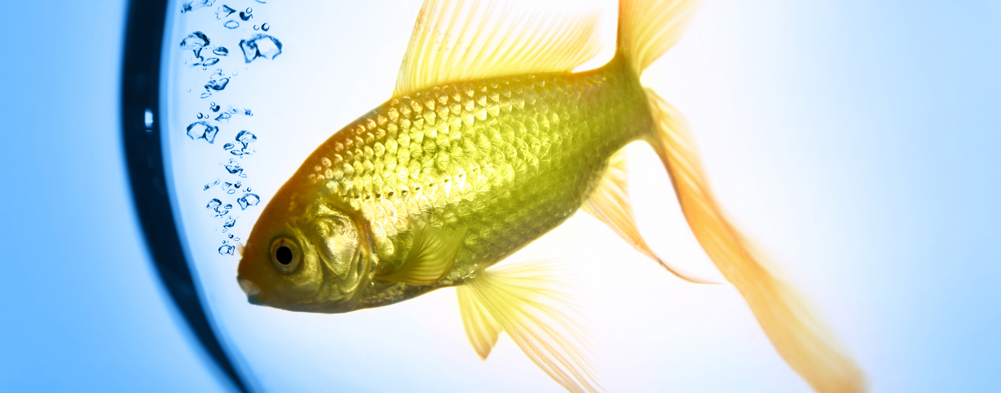 Your pet fish requires an aquarium with safe and tested water