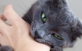 Cat biting hand. Learn about the difference between cat biting and cat play biting.