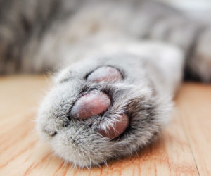 Declawed cat. Cat biting is more common in declawed cats.