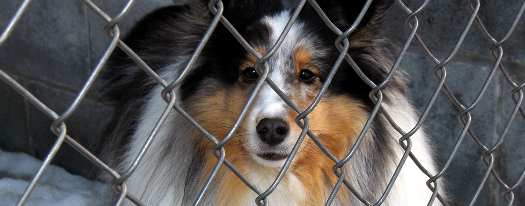 If your dog has kennel cough, you should isolate them from other dogs