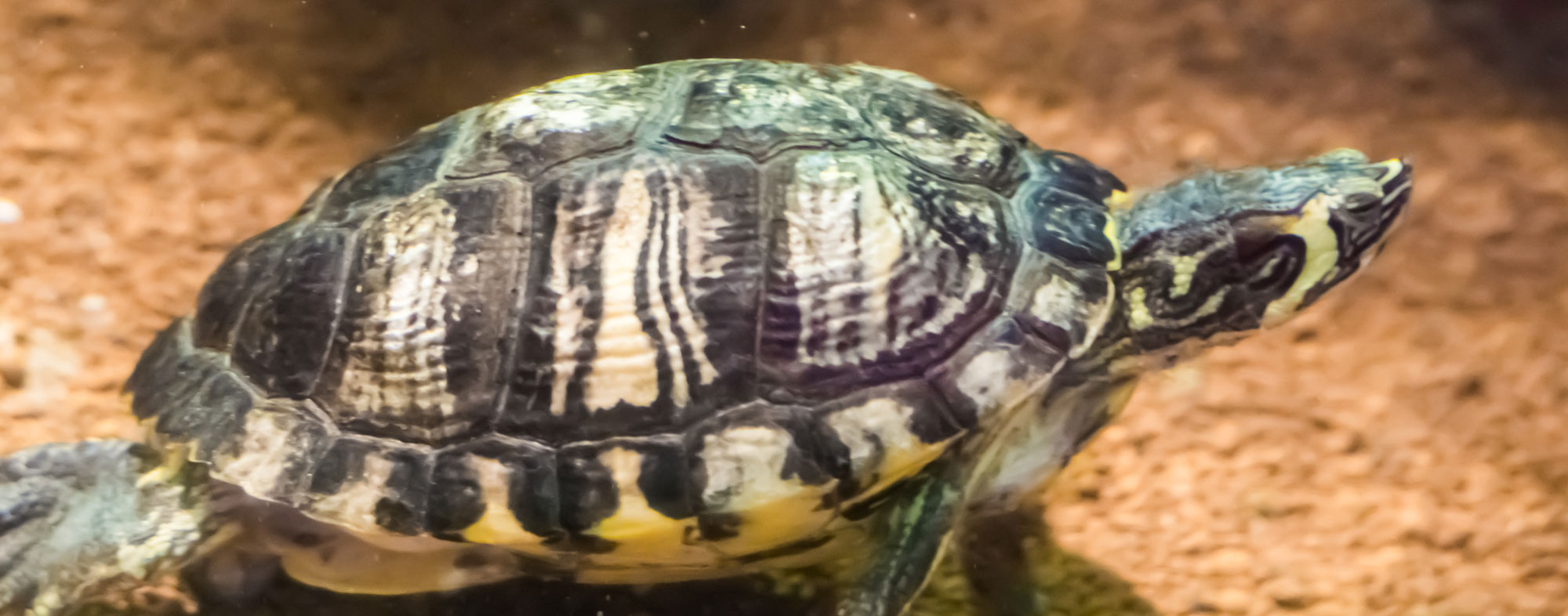 Monitoring Your Turtle's Health - Hartz